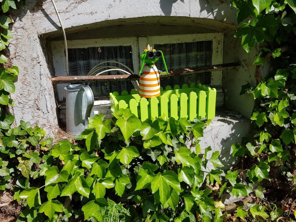 Frosch blickt in den Garten
